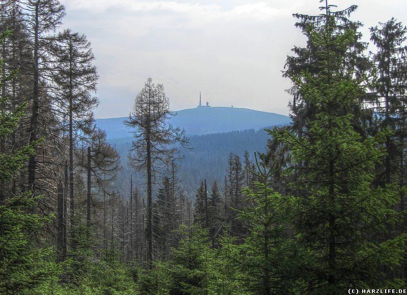 Blick von Clausthaler Flutgraben zum Brocken