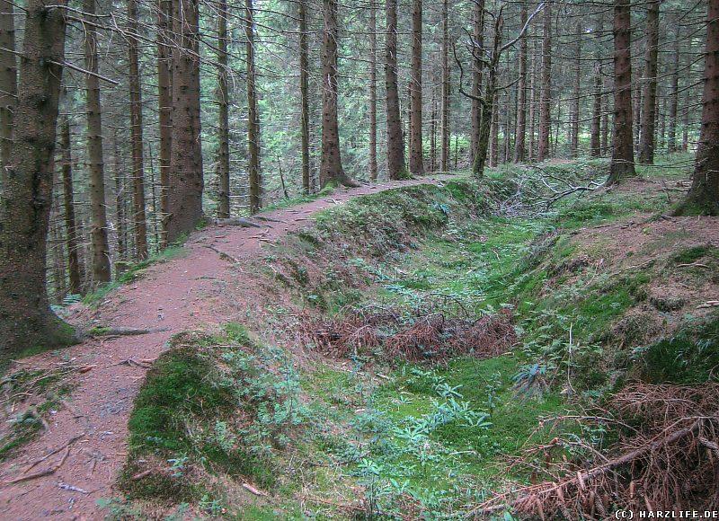 Der Wanderweg am Alten Dammgraben