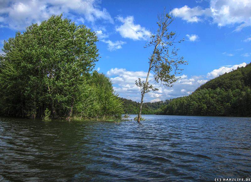 Überschwemmtes Ufer am Stausee Wendefurth
