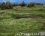 Hexenmoor Brocken