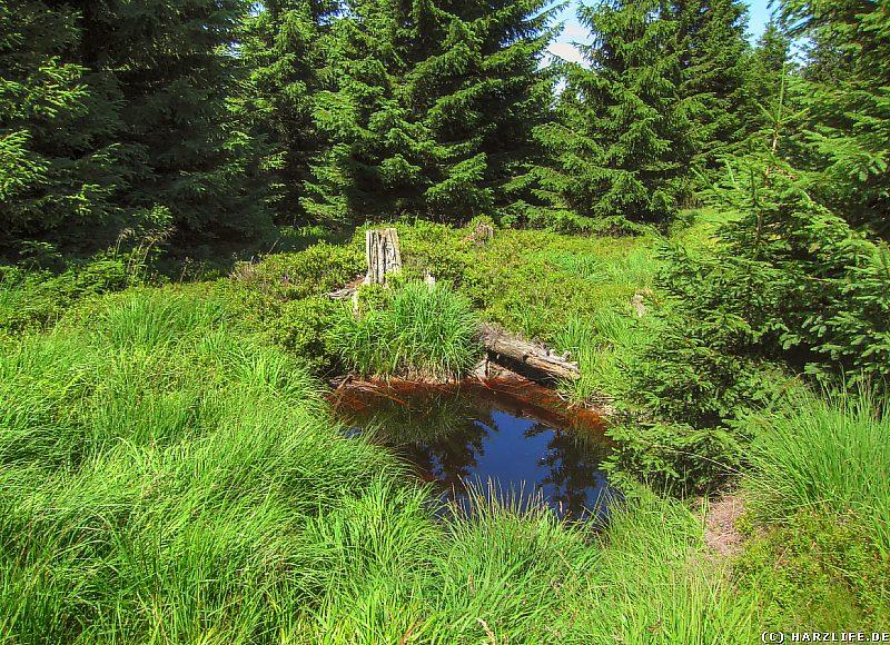 Hochmoor auf dem ''Acker'' im Harz