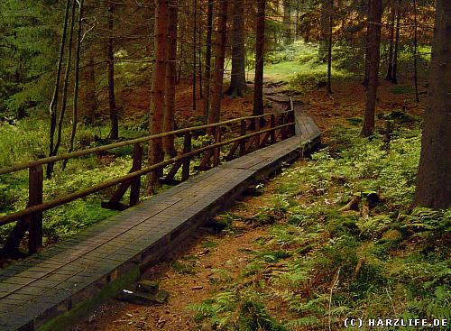 wandern im Harz - Auf dem Wasserwanderweg Prinzenteich - Flambacher Teiche