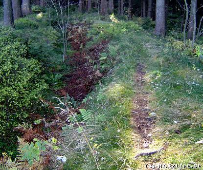 wandern im Harz - Der Luttengraben
