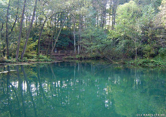 Die Rhumequelle - malerische Umgebung mit Urwaldcharakter sowie wertvolles Biotop