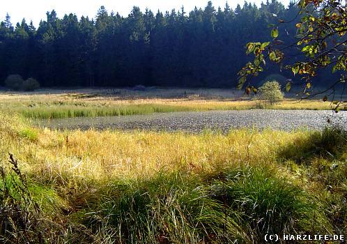 Der Untere Nassenwieser Teich - ein aufgegebener Bergbauteich bei Buntenbock