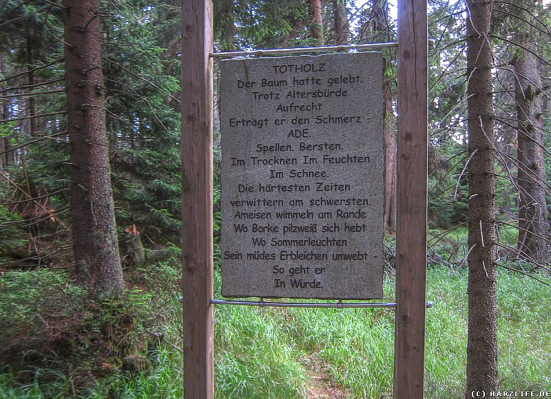 Totholz - Station eines ewigen Kreislaufes
