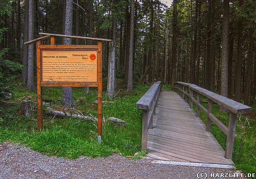 Im Brockengebiet bestimmt die Natur die Entwicklung des Waldes