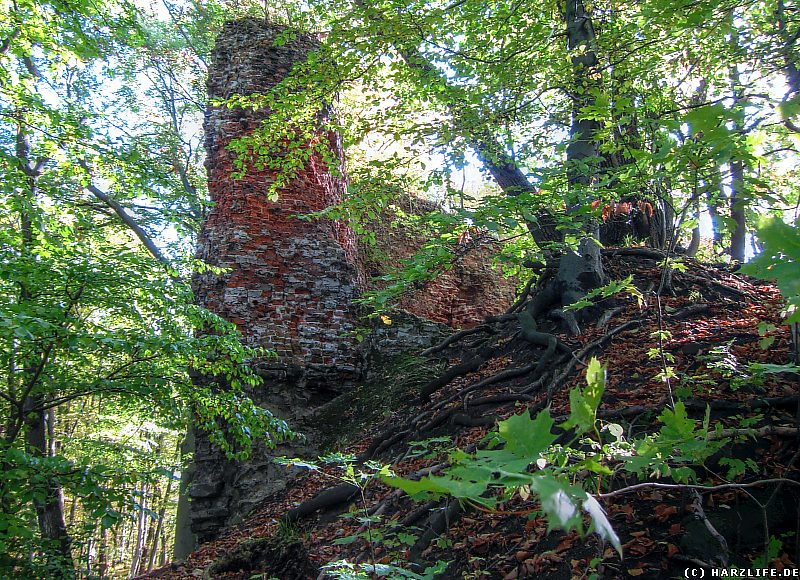 Bilder von der Burgruine Grillenburg - Reste der Palasmauer