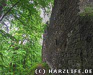 Mauer des Palas