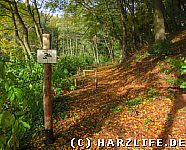 Waldweg mit Hürdenlaufstrecke