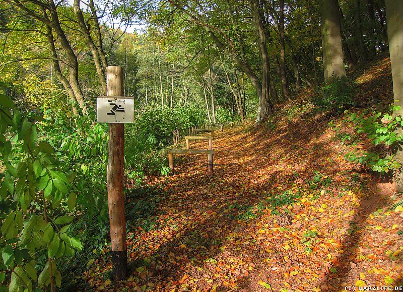 Waldweg mit Hürdenlaufstrecke bei Grillenberg