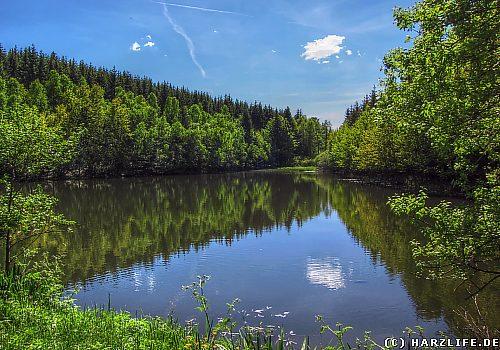 Der Ellerteich im Harz