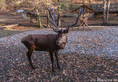 Im Wildpark Christianental